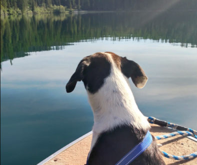 Dog on the boat in Montana