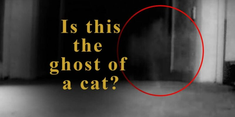 Ghost Cat Caught On Tape