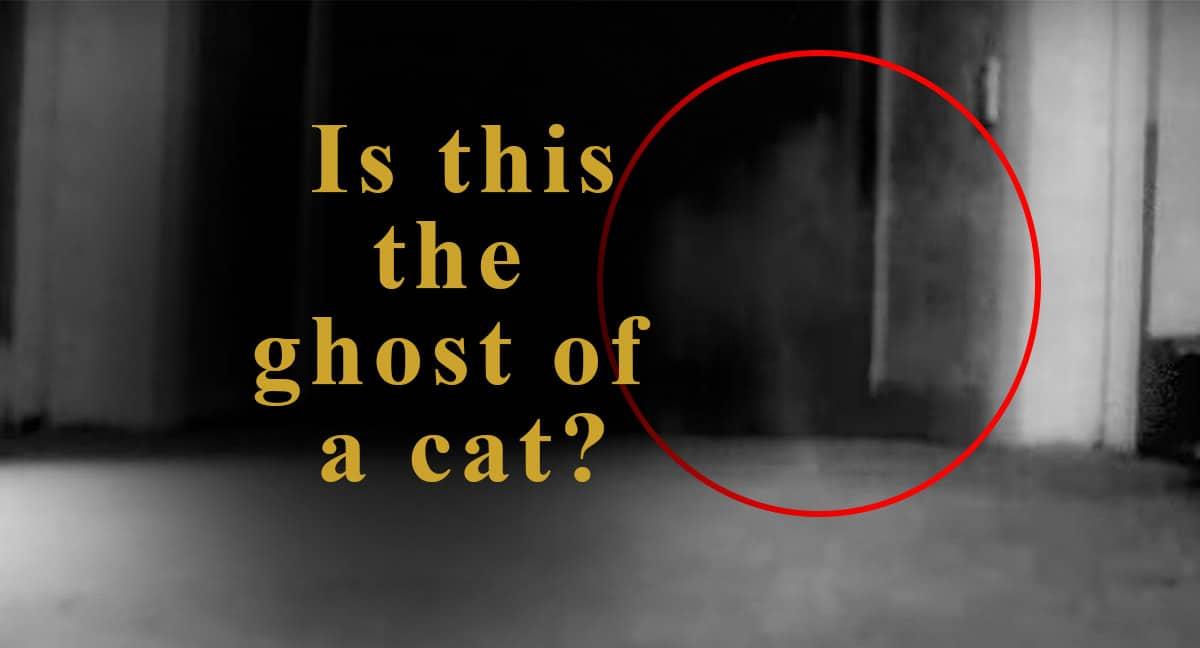 ghost cat video