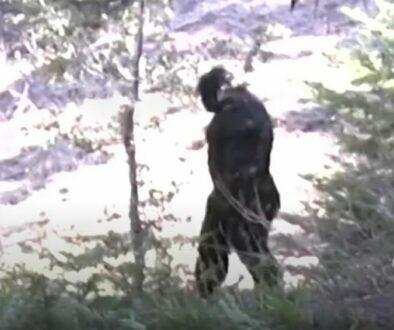 North Idaho Bigfoot Video
